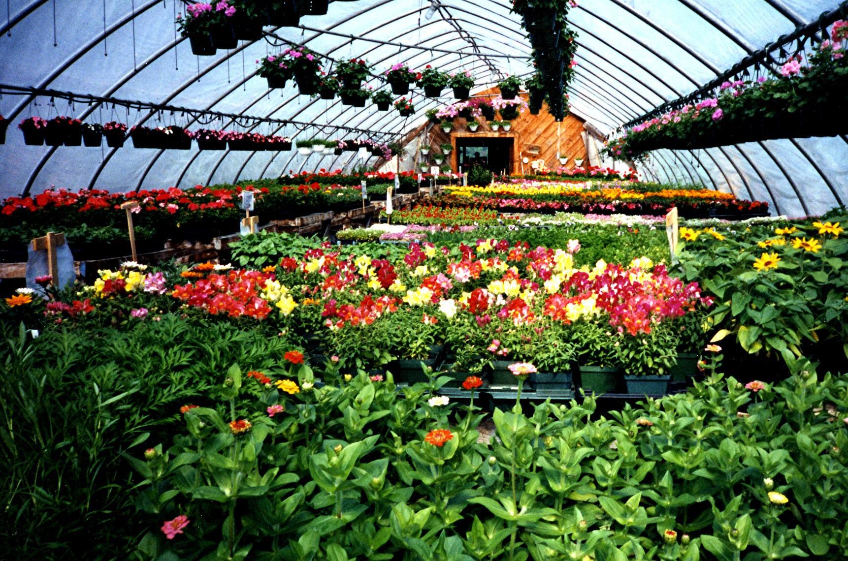 Цветы из теплицы купить, букеты
